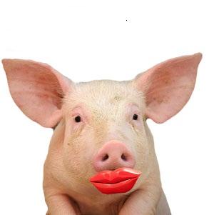 Lipstick_on_a_pig5